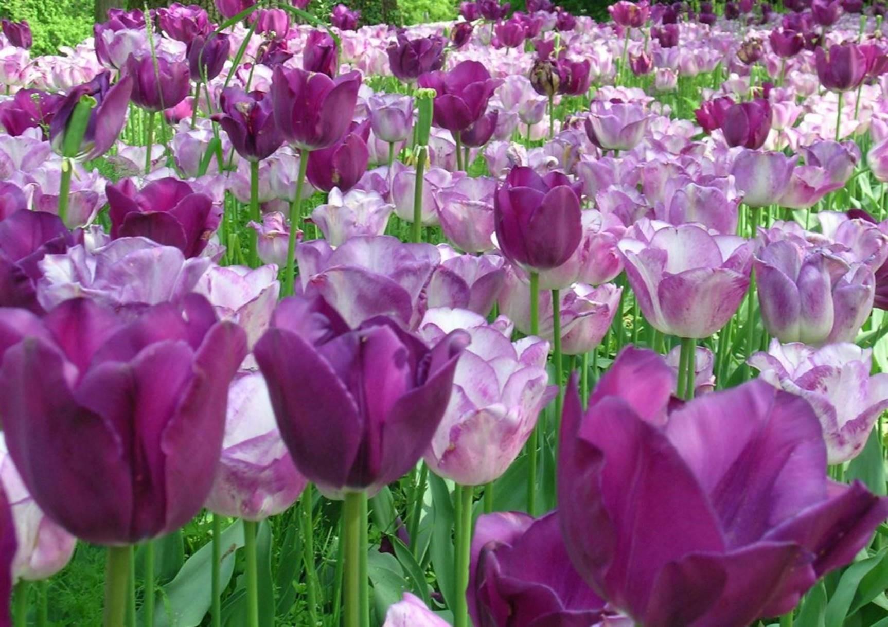 Arrivata la primavera, goditi la bellezza vera!